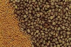 Вкусные рецепты: Баклажаны с зеленью, овощи в соусе, Бублички